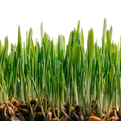 How-Can-You-Tell-if-Your-Lawn-is-Healthy